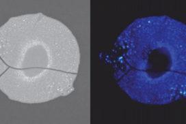 Koito Develops New Fluorescent Nanocomposite With Tripled Blue Light Intensity